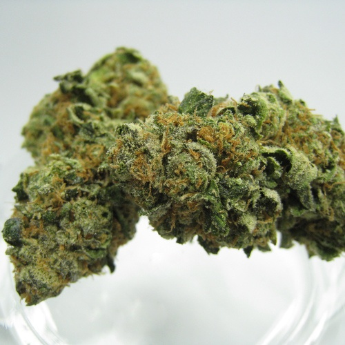 Cookie Wax Platinum: Berner's Original Girl Scout Cookies Available By