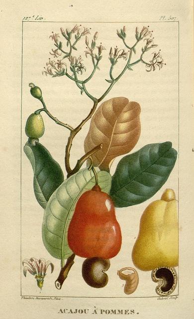botanical print,