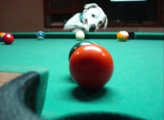 Everyone loves 8 Ball Multiplayer Pool! Play at http://www.miniclip.com/games/8-ball-pool-multiplayer