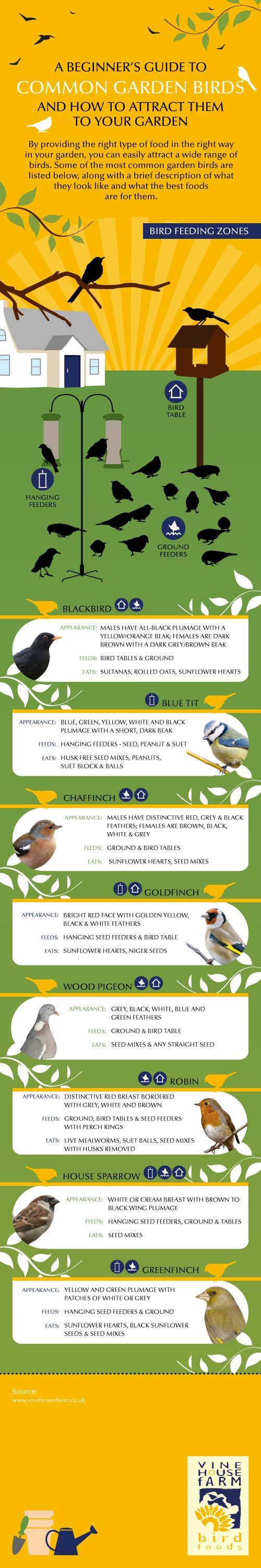 Infographic on attracting common garden birds from Vine House Farm.  http://wtru.st/ZVXxmY