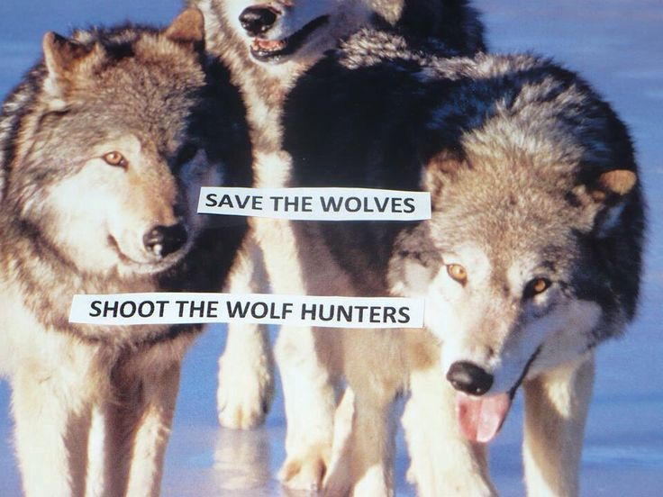 black  u0026 white jordans 10 Stop killing Wolves