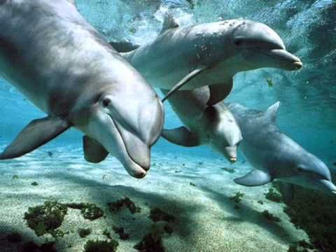 Relax Music _ Nature and Dolphins _ Natura e Delfini
