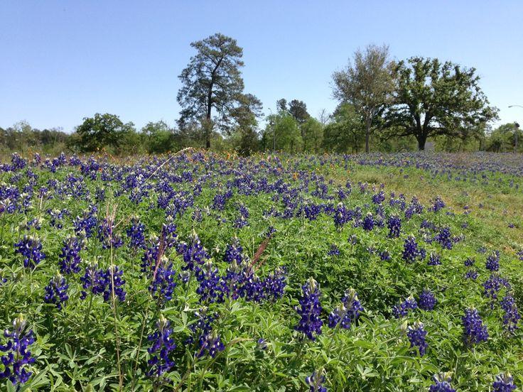 Bluebonnet Iphone Wallpaper 15 Best Houston Parks Images On Pinterest Houston Parks