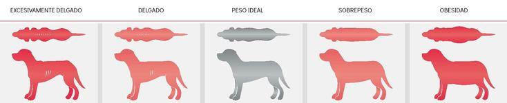 tabla peso ideal del perro