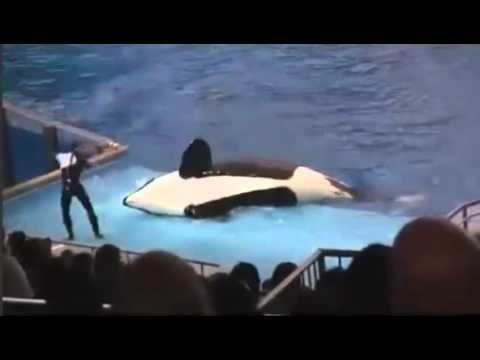 Balina Eğitmeni Sahneden Atıyor!!