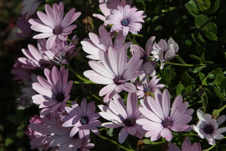 Flores y más flores...