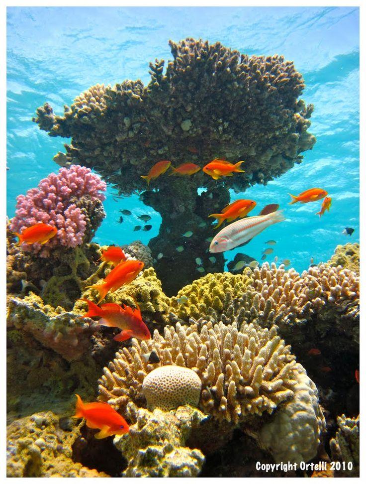 Hurghada, Qesm Hurghada, Governació de la Mar Roja, Egipte
