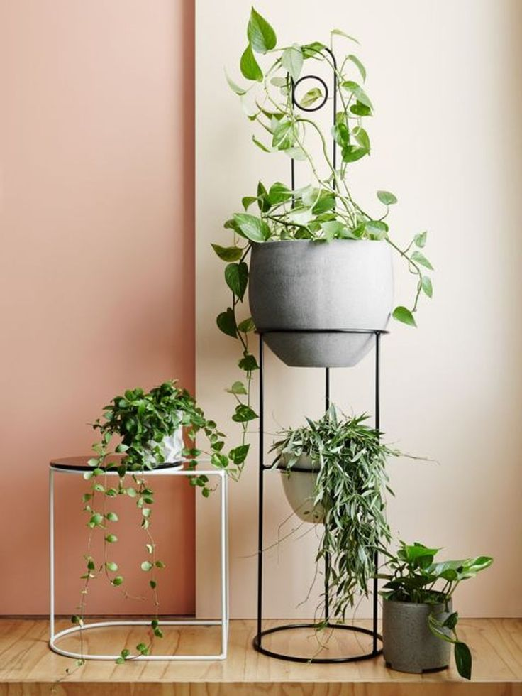 Best 25 indoor plant stands ideas on pinterest plant for Herb stand ideas