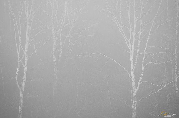 https://bogdandanphotography.wordpress.com/2015/12/27/saltnpepa-a-study-in-light/