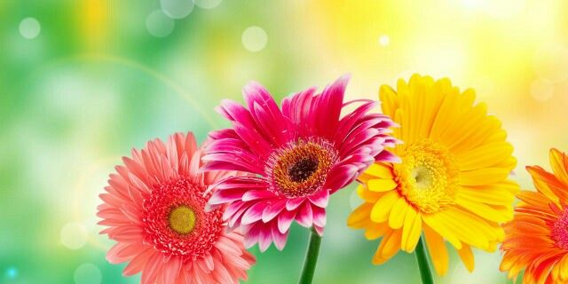 """""""Conta i fiori del tuo giardino, mai le foglie che cadono!"""" cit."""