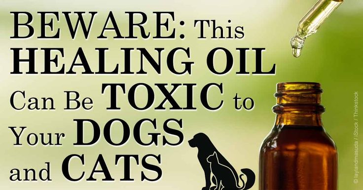 Coconut oil is a saturated fat often given to dogs with dry skin or itchiness to improve coat condition, provide energy and aid in weight management. Toxicity Because it is a medium chain fatty acid, coconut oil is not toxic at any dosage when given to most dogs.