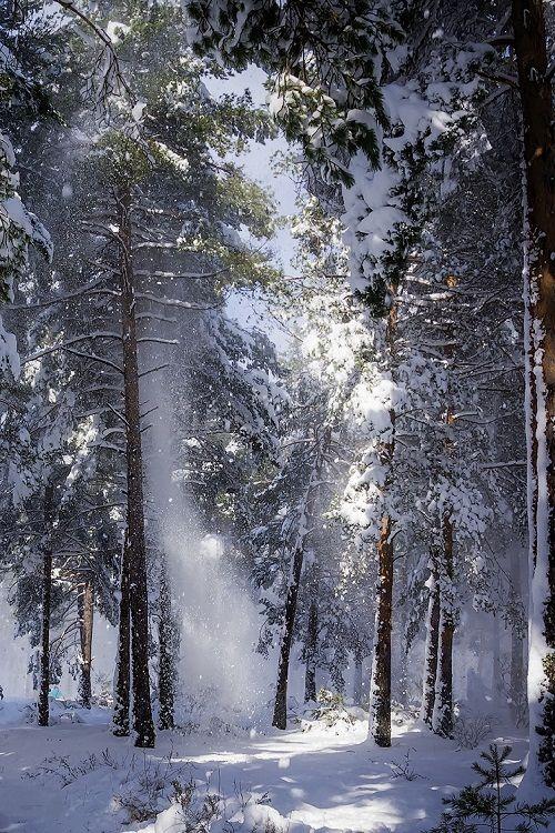 ponderation:Blizzard at the pinewood by javierdb
