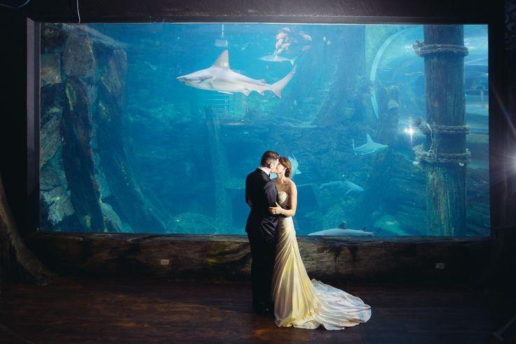 Melbourne Aquarium reception