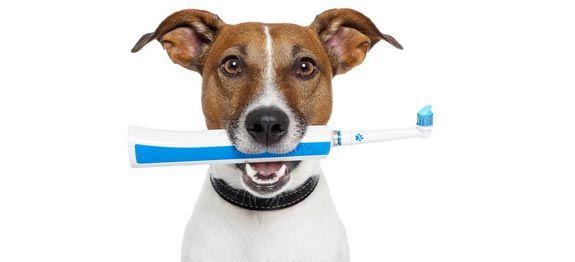 Détartrer les dents de mon chien | Remèdes de Grand-Mère