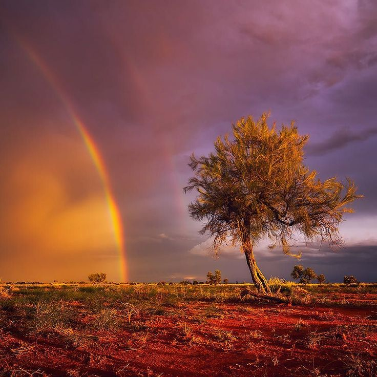A double rainbow on sunset during an outback storm. I remember this quite vividly like it was yesterday although I shot this photo around 6 months ago. // #pilbara #doublerainbow #outback