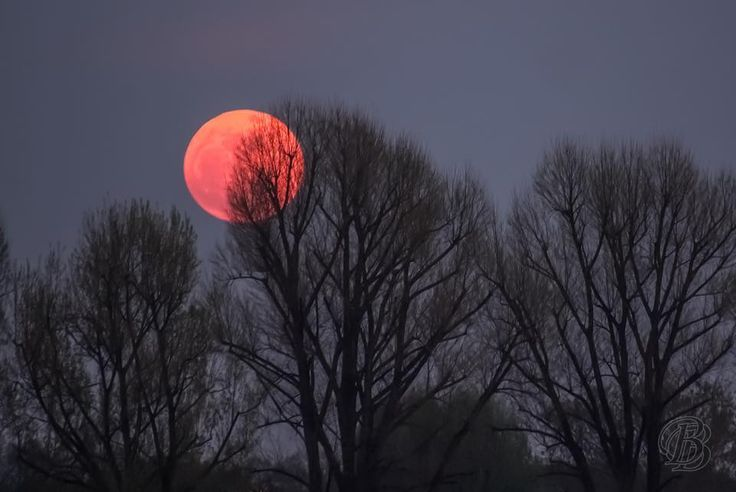 Moon | #Moon | #Red | #Universe