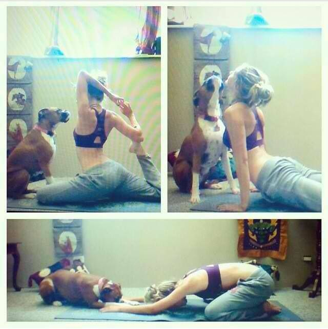#Boxer doing yoga with her friend.