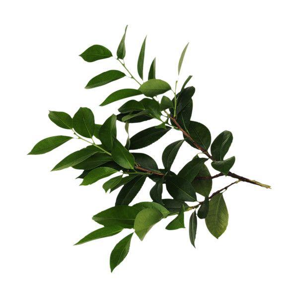 Тутти-фрутти 82 ❤ liked on Polyvore featuring leaves