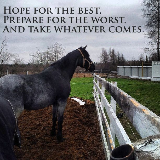 19 best Our family :) images on Pinterest | Horses, Horse ...