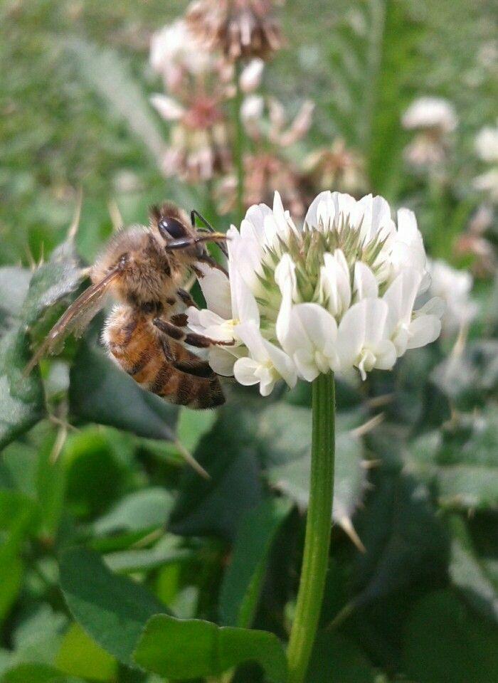 Bee..
