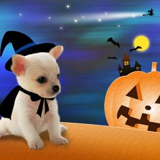 Cute halloween dogs cute halloween screensavers free - Free funny animal screensavers ...