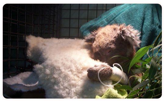 Jirrahlinga Koala & Wildlife Sanctuary - Call (03) 5254 2484
