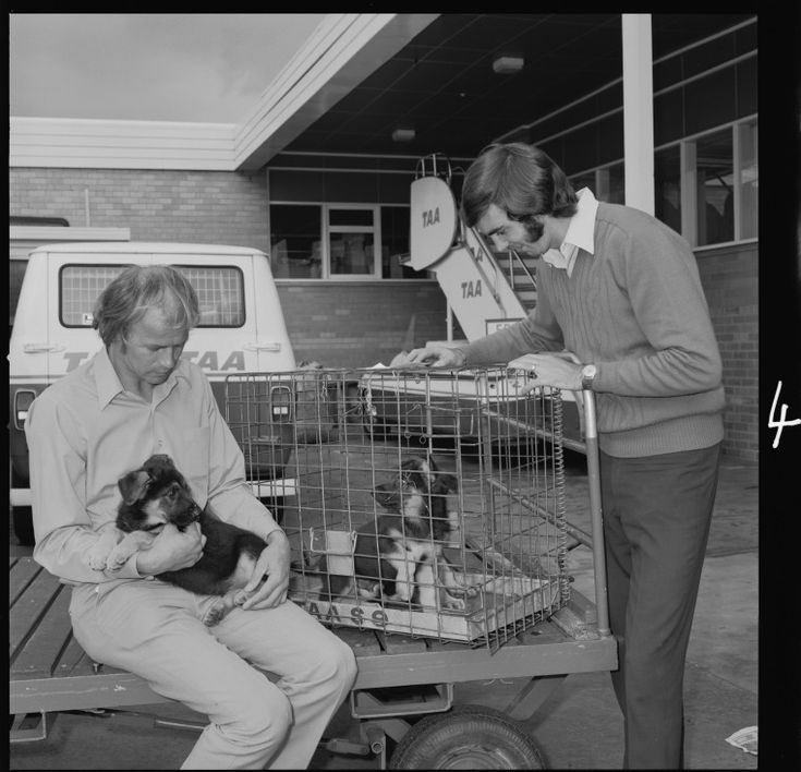 360003PD: Dogs caged ready for travel in a TAA aircraft, Perth Airport, 1973.  http://encore.slwa.wa.gov.au/iii/encore/record/C__Rb3096643__STrans-Australia%20Airlines%20--%20Photographs.__P0%2C11__Orightresult__X1?lang=eng&suite=def