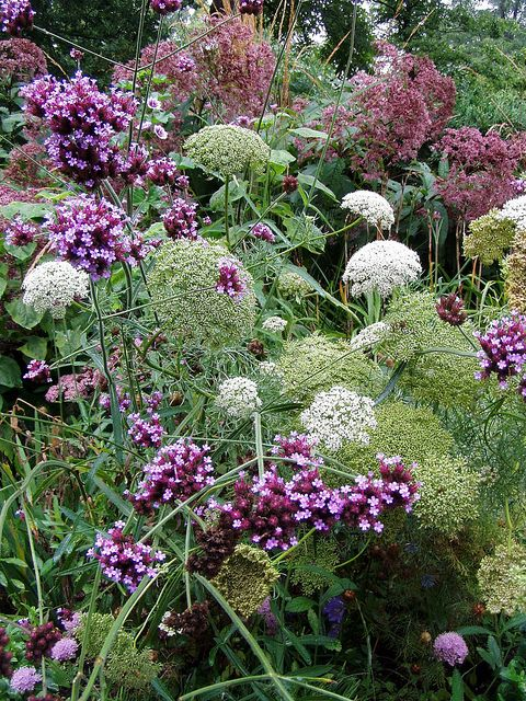 Queen Anne's Lace, verbena bonariensis, and Joe Pye weed at Squire House Gardens in Afton, MN.