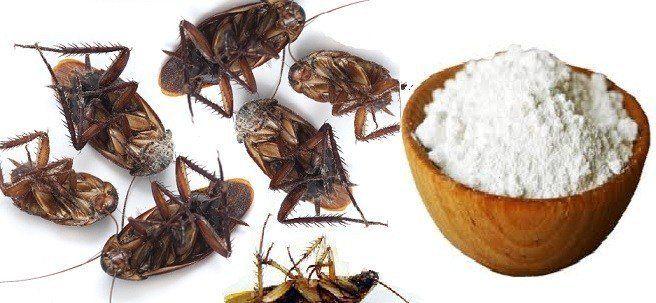 Découvrez des astuces simples et naturelles pour faire la peau aux cafards chez vous !