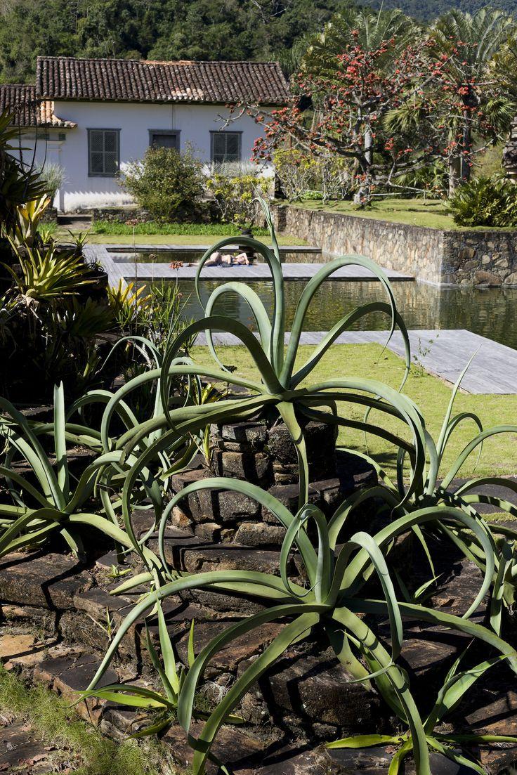 356 best horticulture images on pinterest horticulture flower
