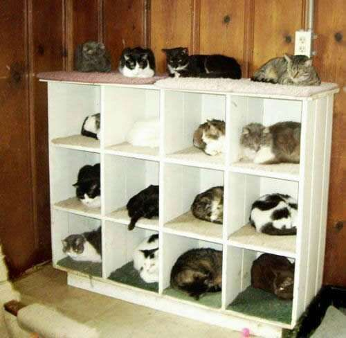 Storage for Cats