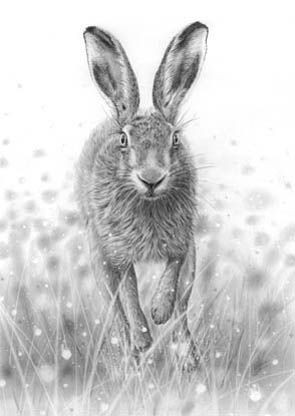 'Running Hare'