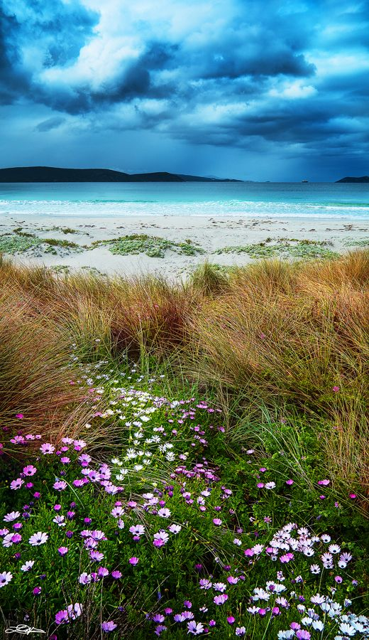 Spring at Middleton Beach - Albany, Western Australia
