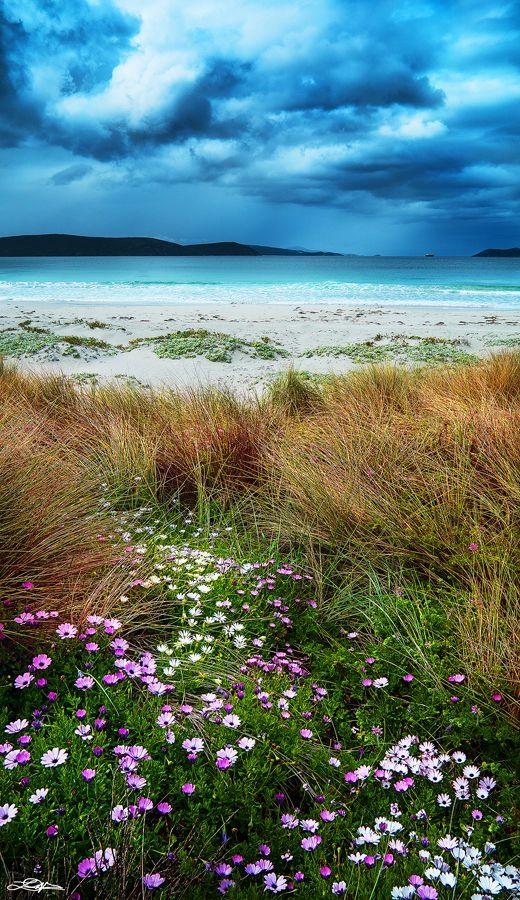 Spring at Middleton Beach - Albany, Western Australia