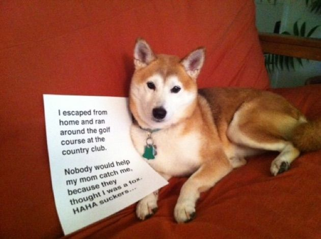 Funny Dog Shaming Pictures