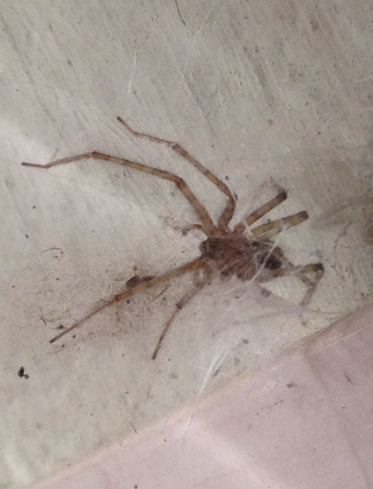 È la stagione dei ragni