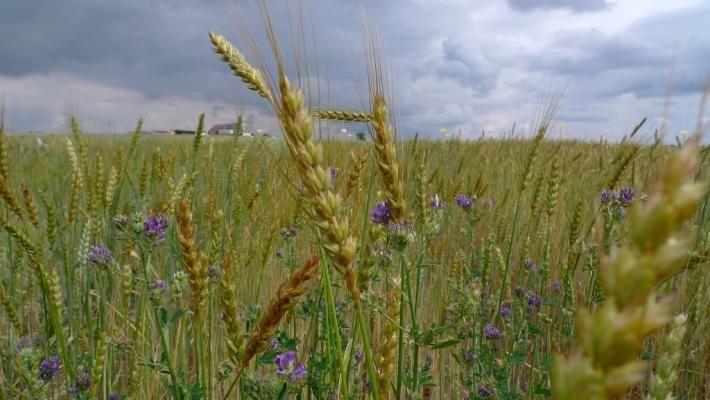Biologische landbouw goed voor overbevolkte planeet: Biologische landbouw is een goede manier om de snelgroeiende wereldbevolking te voeden, zelfs als de opbrengst lager is dan bij conventionele landbouw. Dat stellen onderzoekers van de Washington State University in de Verenigde Staten.