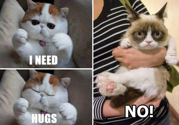 Meme Hugging Picture   Division of Global Affairs