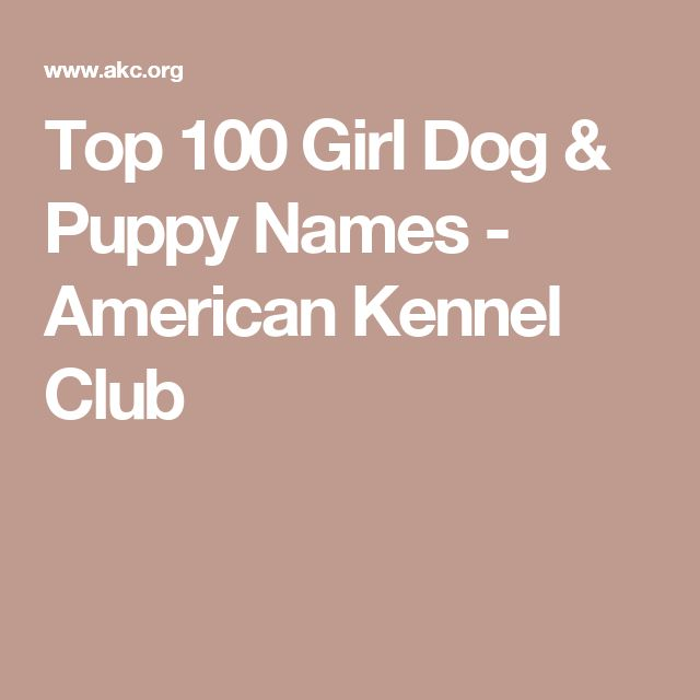Top 100 Girl Dog & Puppy Names - American Kennel Club