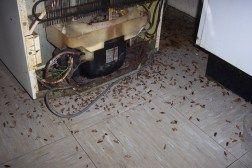 fumigar cucarachas alemanas