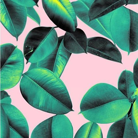 feeling this leafy colour combo #willowshometraders #newcastle #colour #inspo #plants via @rhiannaellington