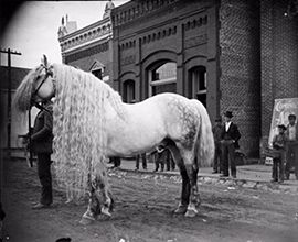 "The last words spoken by Lady Godiva as she fell of her steed were: ""Remember the mane"" - Rich Hamell http://www.globalmuseum.org #captioncontest #museum #globalmuseum #humor #humour"