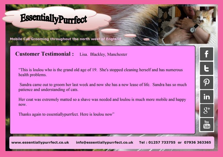 Customer Testimonial of EssentiallyPurrfect #mobile #catgrooming service.  Lisa #Blackley #Manchester