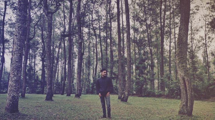 Hutan Pinus Coban Rondo Malang