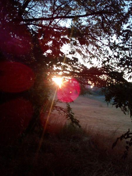 To zdjęcie bierze udział w Konkursie Fotograficznym Empikfoto. Zagłosuj! Słonko zerka zza drzewa – EDZIA