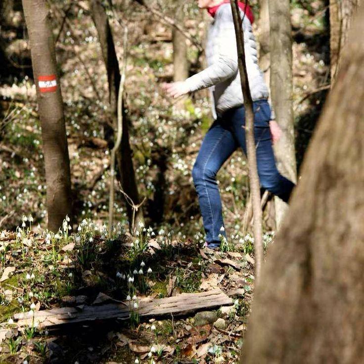 Wandern im #Frühlingstal #Eppan #Montiggl#dit kan ik nog