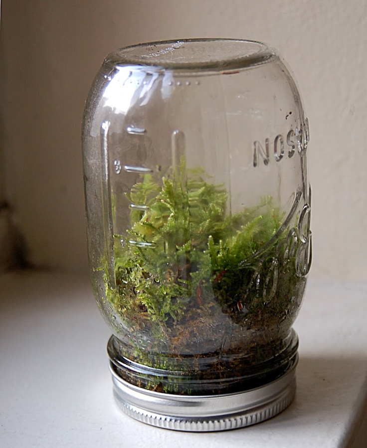 """Mason Jar Terrarium by disdressed.blogspot.com: """"For those of you who use Pinterest, you know the only thing cooler than making a terrarium could be a terrarium inside a Mason jar.""""- Ben Silbermann http://allthingsd.com/20120814/pinterest-nudges-users-off-the-couch-and-into-the-world-with-new-android-and-ipad-apps/  #Terrarium #Mason_Jar #Liesell_Gbson"""