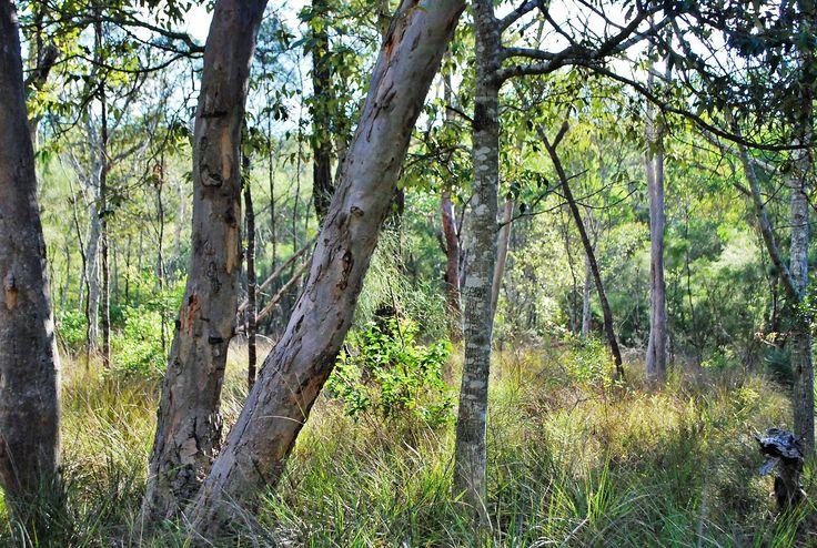 Crows Nest Falls, QLD. Australia.