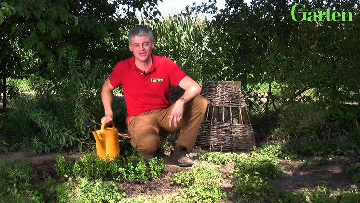 Buchsbaum wächst langsam und ist deshalb ziemlich teuer. Grund genug also, die immergrünen Sträucher selbst zu vermehren. Wer genügend Geduld mitbringt, kann mit der eigenen Anzucht von Buchsbaum-Stecklingen viel Geld sparen.