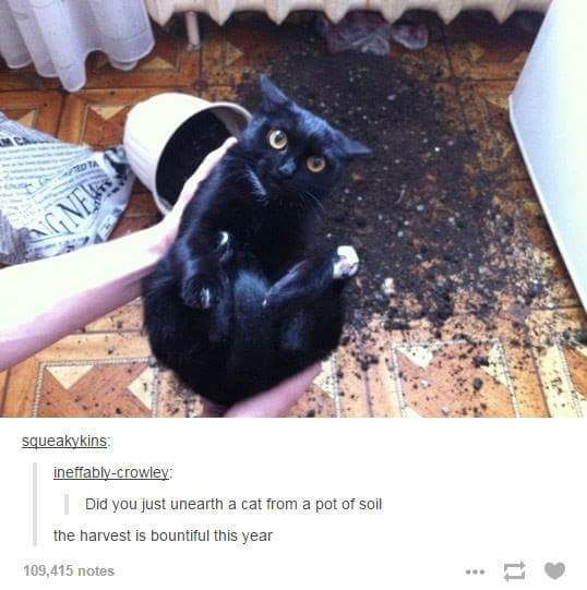 35 Tumblr Posts About Animals Guaranteed To Make You Laugh